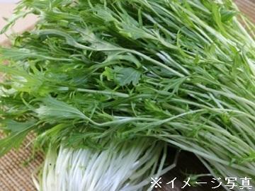 大崎市×野菜/法人【33231】-2
