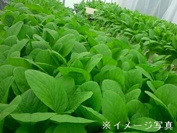 湖西市×野菜/個人【33240】-top