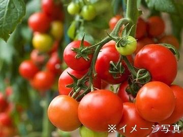 浜松市×野菜/個人【33248】-top