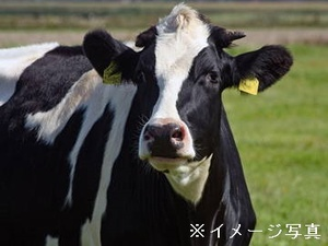 標茶町×酪農/法人【33263】-top