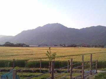 出雲市×野菜・稲作・肉牛/法人【33272】-top