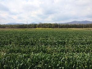日本の農業を支える大規模農業の将来とは