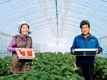 株式会社Farm大越-top