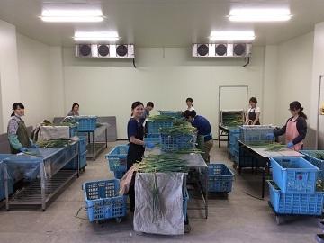 奈良県葛城市×露地野菜/法人【33293】-2