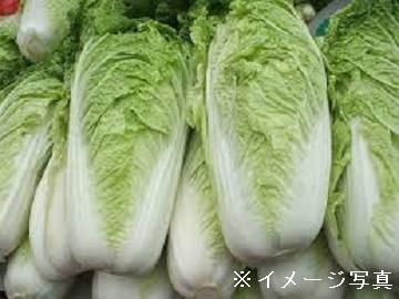 小海町×露地野菜/個人【33332】-top