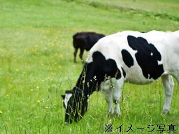 別海町×酪農/法人【33341】-top