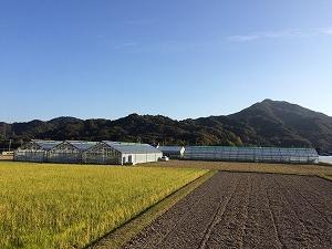 今後の農業について