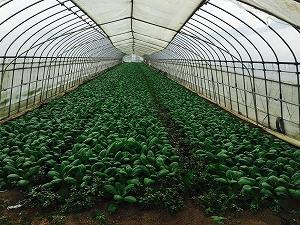 今後の農業の将来性と公的支援について