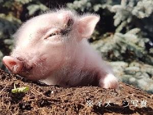 鉾田市×養豚/個人【33373】-top