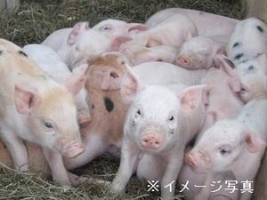 八幡平市×養豚/法人【33386】-top
