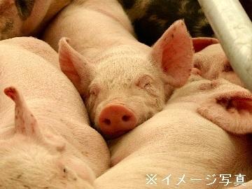 弥彦村×養豚/法人【33393】-top