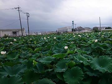 玉名市×開発/法人【33412】-top