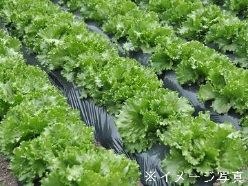 佐久市×野菜/法人【33436】-1