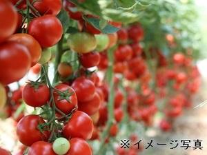 香取市×野菜/法人【33411】-top