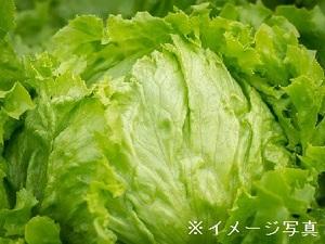 結城市×野菜/個人【33431】-top