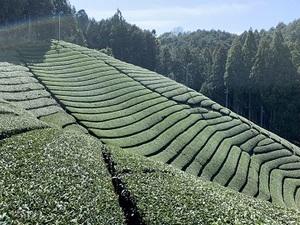 株式会社古京碾茶加工場-top