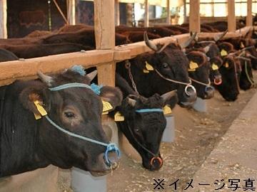 北海道大樹町×肉牛/法人【33446】-2