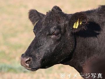 大樹町×肉牛/法人【33446】-top