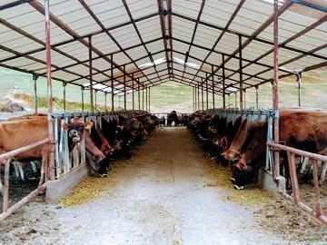 農事組合法人 雪ヶ峰牧場 牛乳生産組合-1