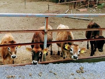 農事組合法人 雪ヶ峰牧場 牛乳生産組合-2
