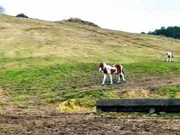 農事組合法人 雪ヶ峰牧場 牛乳生産組合-7
