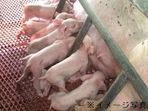 渋川市×養豚/法人【33453】-top