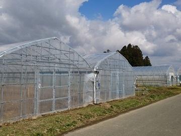 菊池農園-4