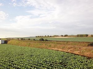 こんなに違う世界の農業!日本が学べることは何か?