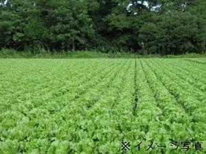 渡辺農園-top