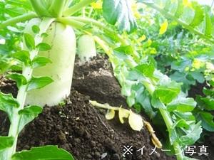 沼田市×野菜/個人【33467】-top