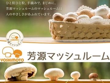 芳源(よしもと)マッシュルーム株式会社-3