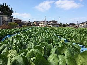 さまざまな課題が混在する日本と世界の農業問題