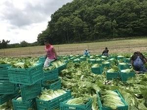 長野原町×野菜/個人【33491】-top