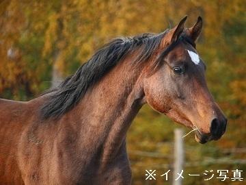 盛岡市×競走馬/個人【33562】-top