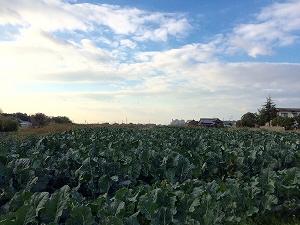 担い手農家になるにはどうすればよい?