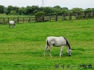 那須×牧場/法人【33598】-top