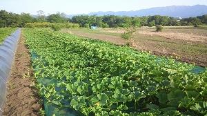 農業・農家の収入について