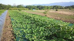 どの野菜が人気?売り上げや栽培法について知ろう