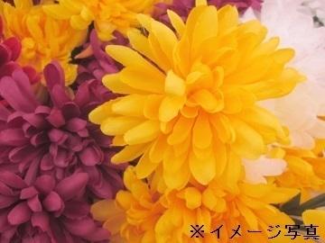 西尾市×花、観葉/個人【33648】-top