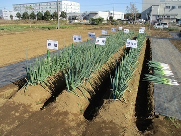 渡辺農事株式会社-6