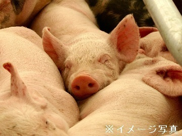 二戸市×養豚/法人【33667】-1