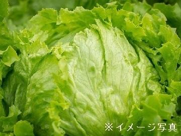 沼田市×野菜/個人【33675】
