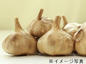 中野市×野菜/法人【33681】-top