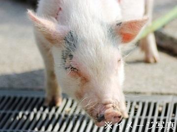奥州市×養豚/法人【33679】-2