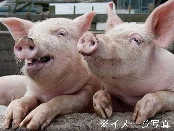 奥州市×養豚/法人【33679】-top
