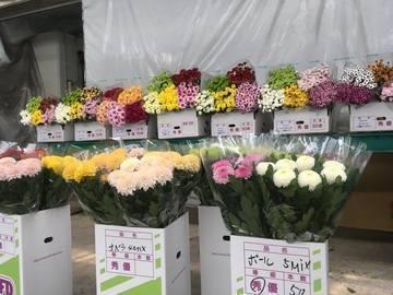有限会社ジャパンフラワードリーム-6