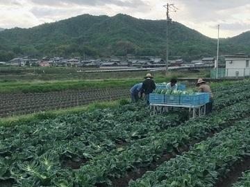 三谷農園-2