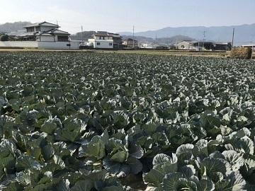 三谷農園-4