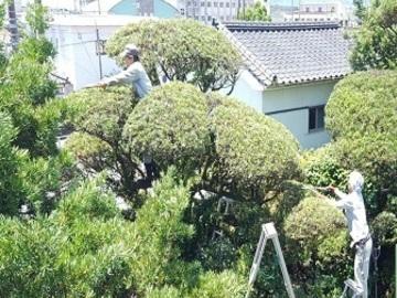錦幸緑化建設株式会社-top