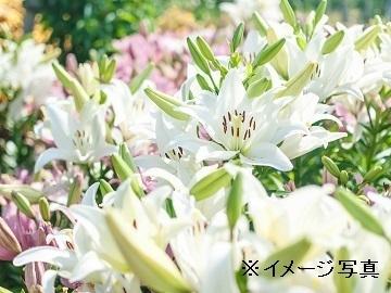 津南町×花/個人-top